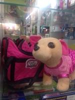 Собачка в сумке Чичилав